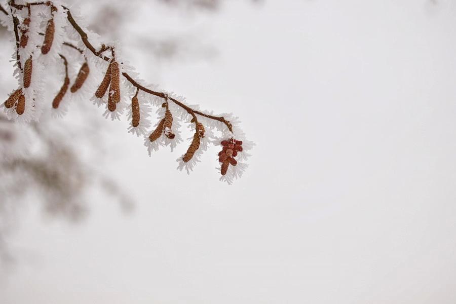 Frozen [20.01.2019]